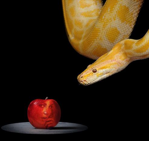 """Featured image for """"Adam & Eve : Faut-il croquer dans la Pomme de l'Amour ?"""""""